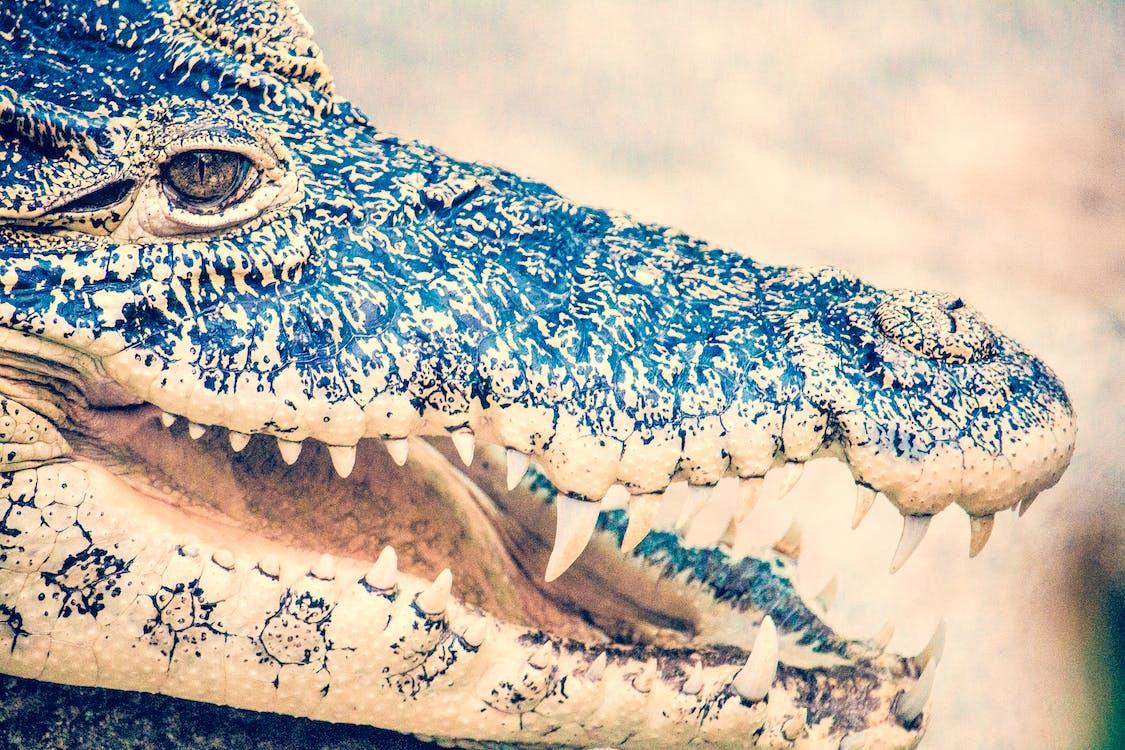 Macro Photography of Black Crocodile