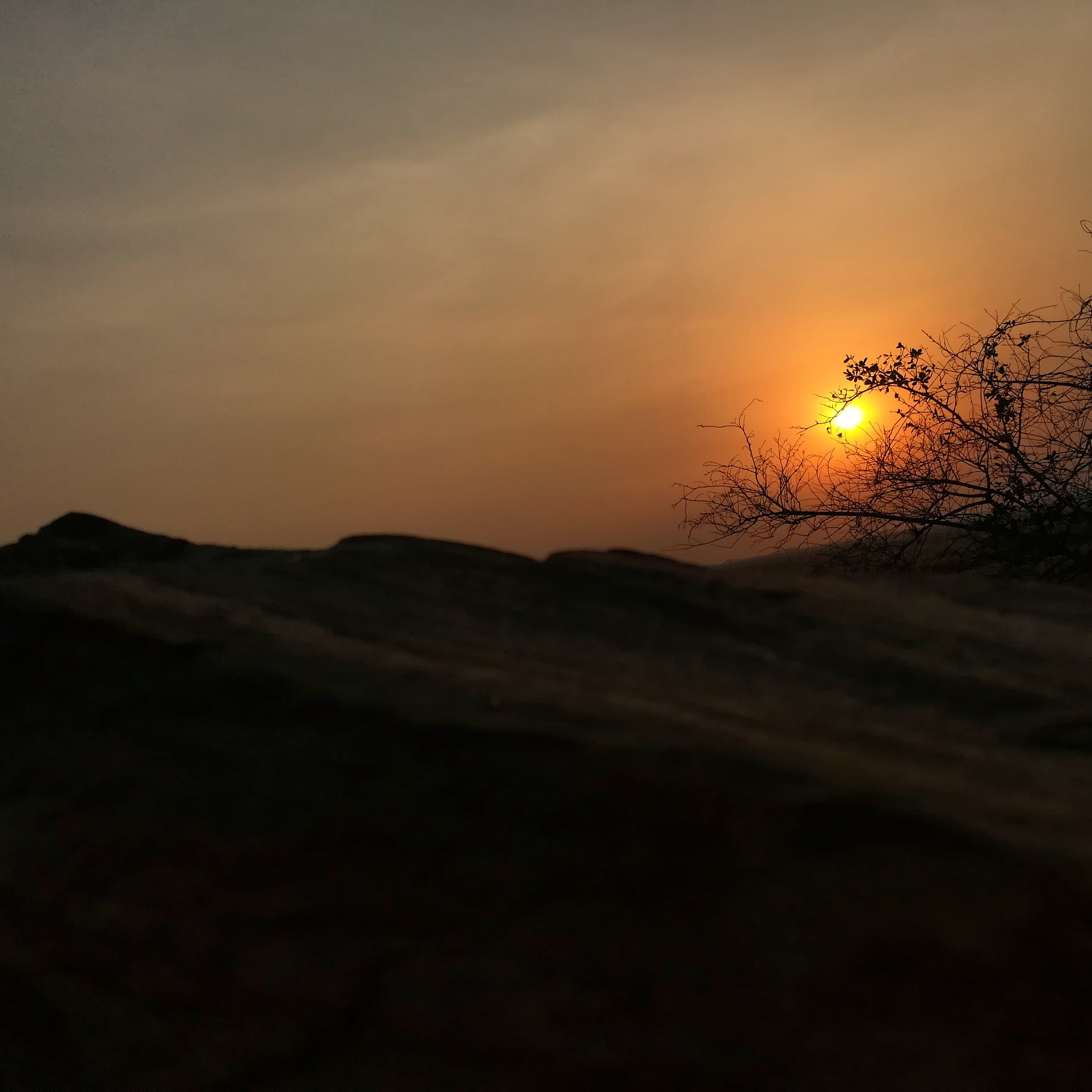 Free stock photo of rocks, Shaded tree, sunset
