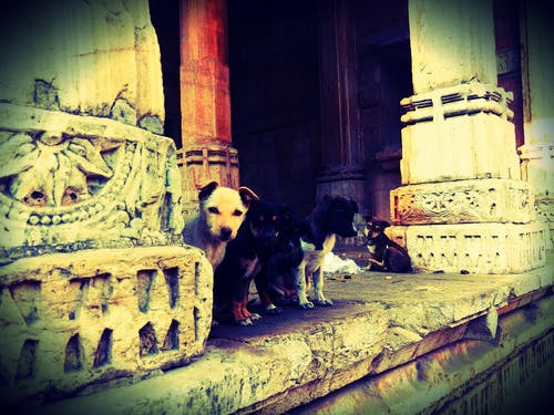 Free stock photo of baby dog, dogs, historical site, puppies