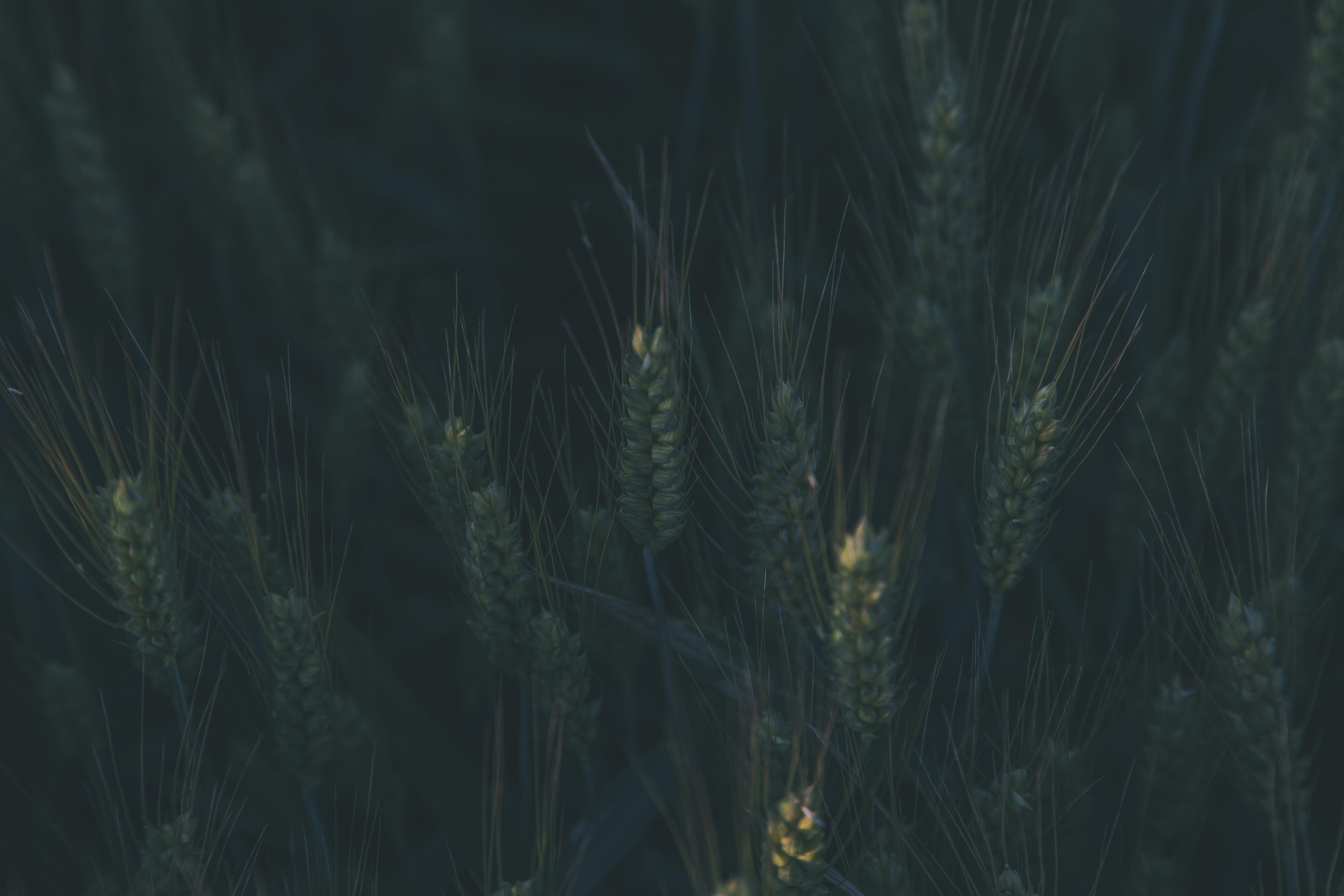 beskära, bete, bondgård