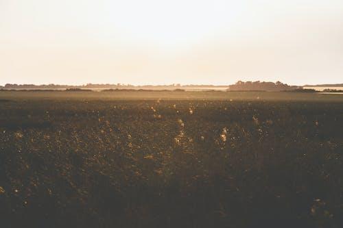 Photos gratuites de agriculture, aube, blé, brouillard