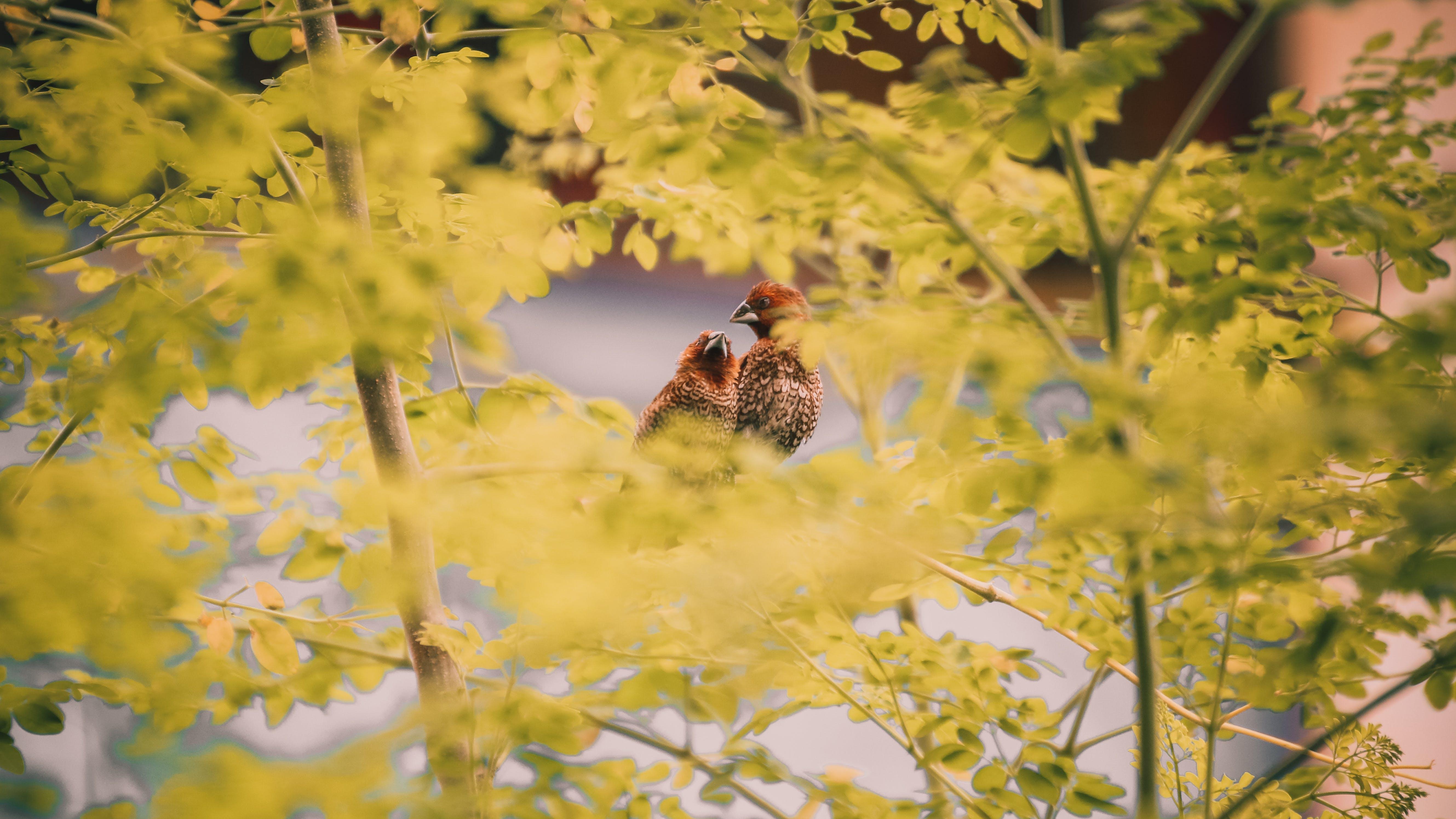 Bird in Trees