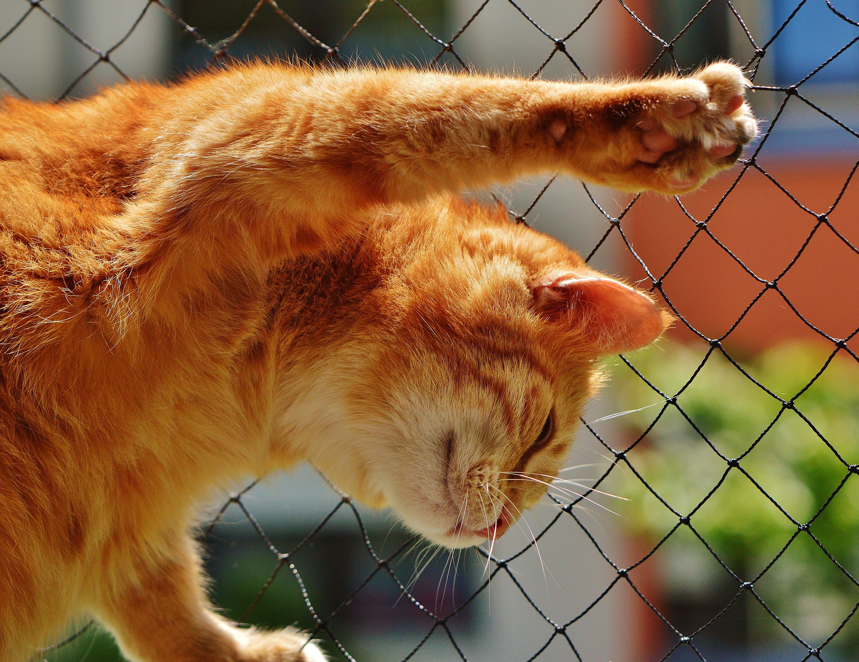 Orange Tabby Cat on Black Rope Link Fence