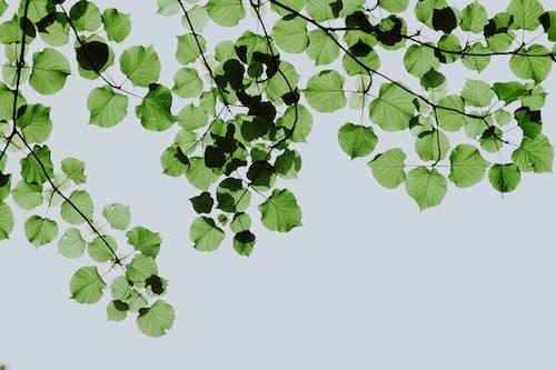 Darmowe zdjęcie z galerii z bujny, ekologia, flora, gałąź