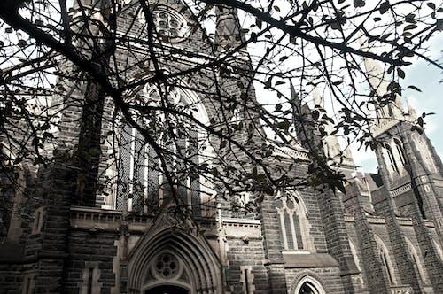 Foto d'estoc gratuïta de arbre, Església