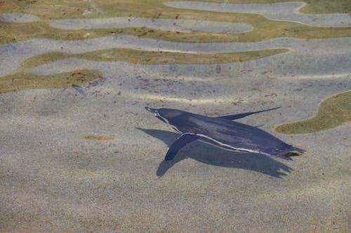 คลังภาพถ่ายฟรี ของ ซาฟารีปาร์ค, น้ำ, ว่ายน้ำ, สัตว์