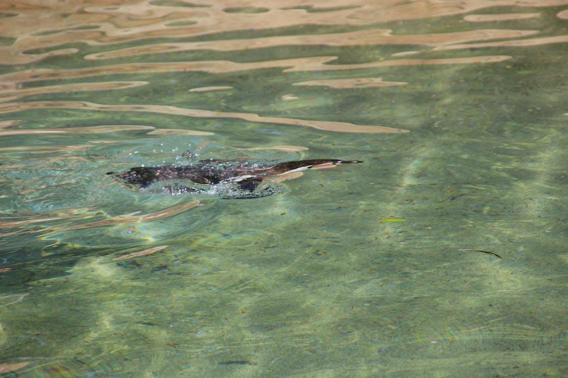 ซาฟารีปาร์ค, น้ำ, ว่ายน้ำ