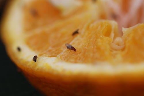 คลังภาพถ่ายฟรี ของ ส้ม, แมลง