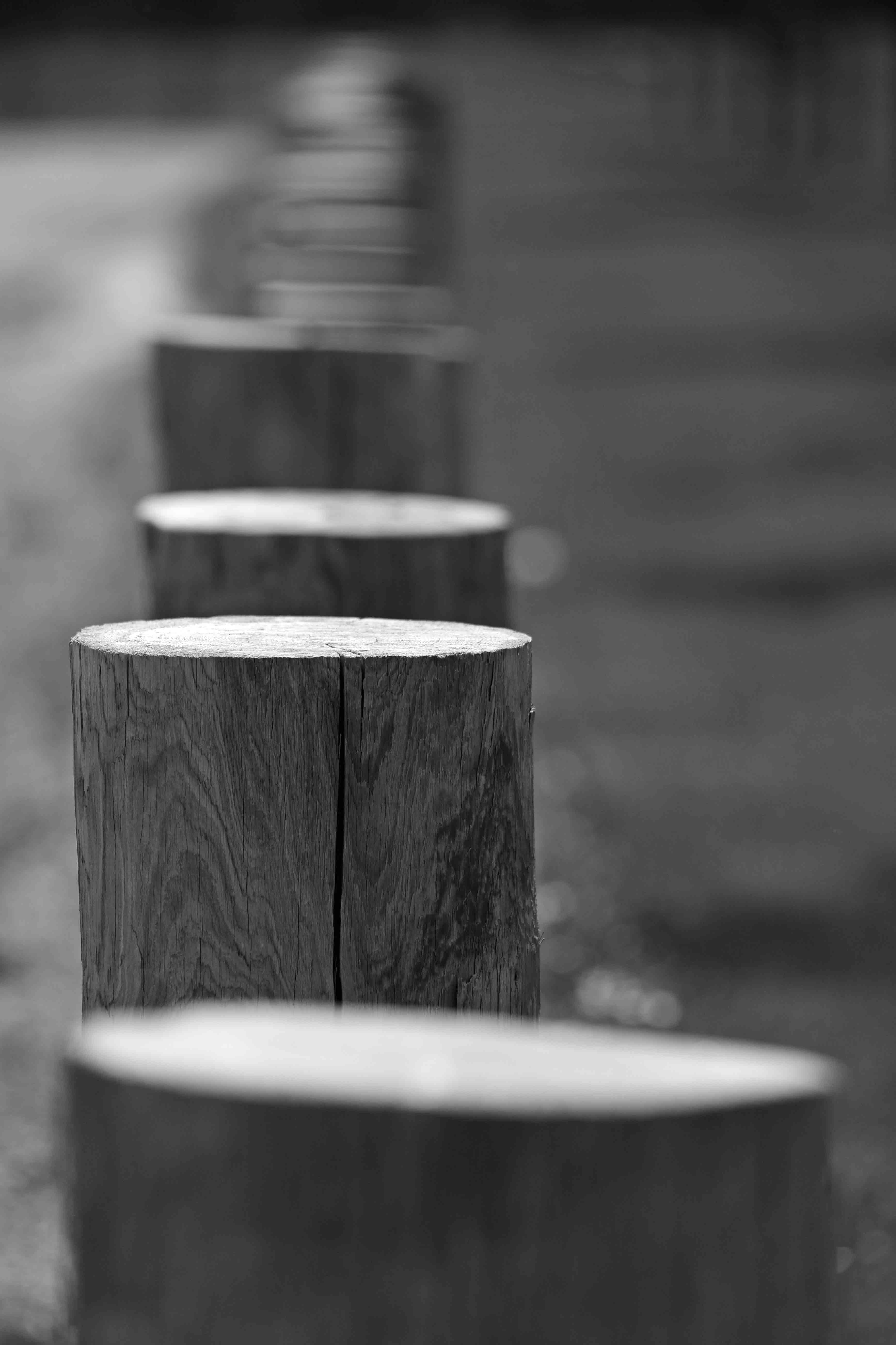 Free stock photo of black and white, line, posts