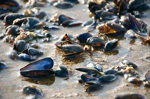 Ingyenes stockfotó Északi-tenger, kagyló témában