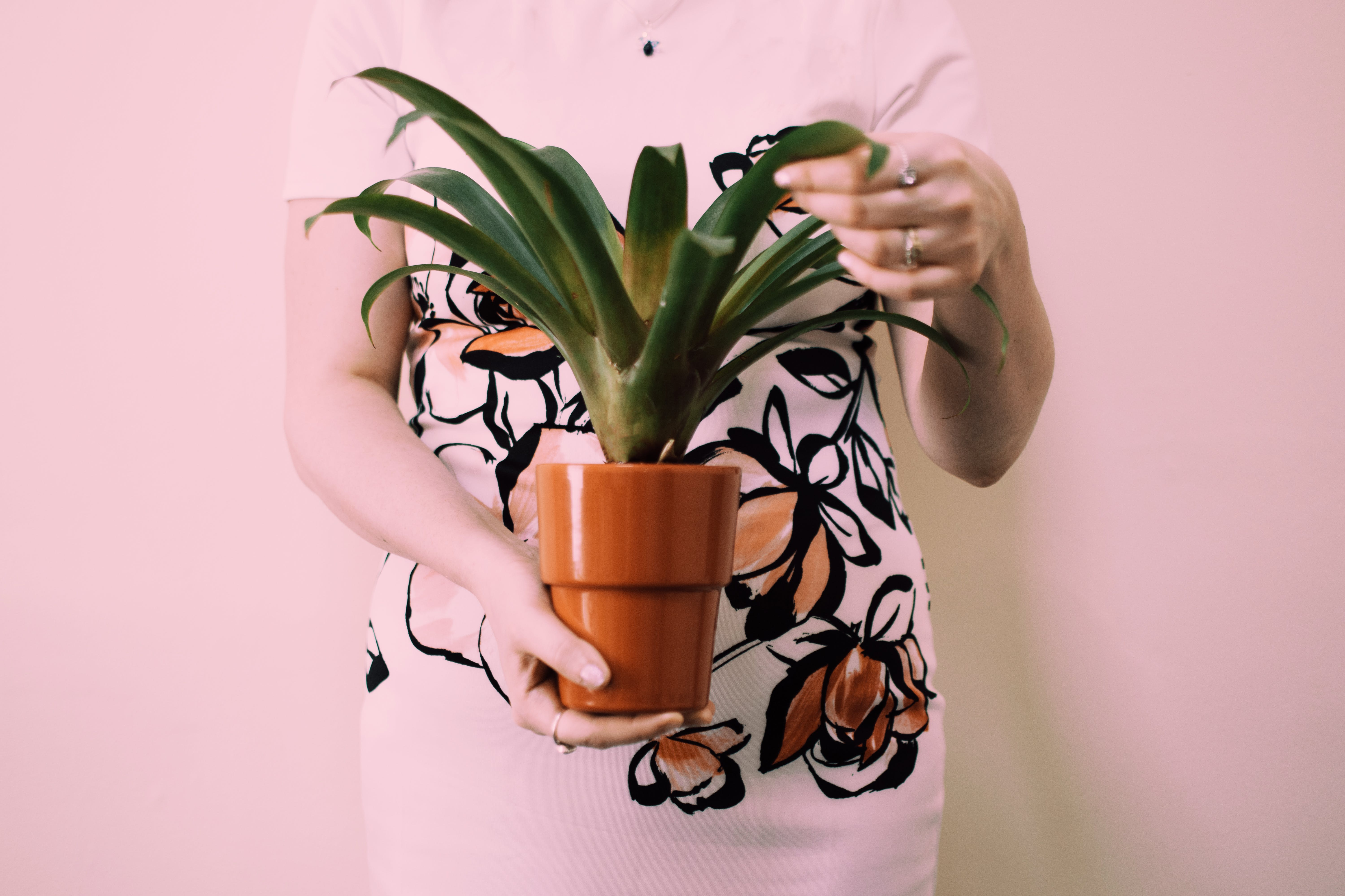 Person Holding Brown Pot With Green Leaf Palm