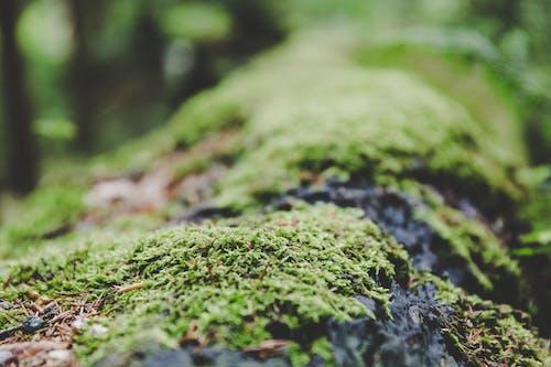 Free stock photo of close-up, macro, moss