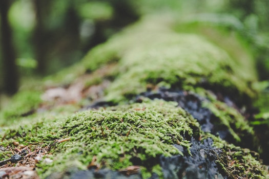 Free stock photo of moss, macro, close-up