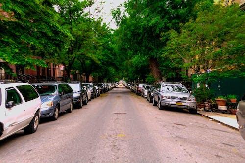 Free stock photo of harlem, newyork, nyc, uptown