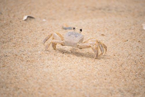 Free stock photo of beach, crab, ocean shore, sand