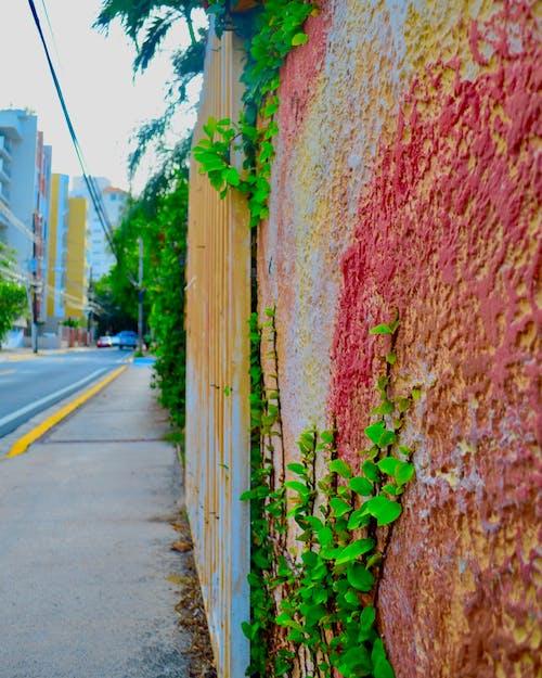 Foto d'estoc gratuïta de arc de Sant Martí, art de carrer, carrer, carrers