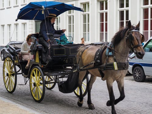 Free stock photo of Belgium, bruges, carriage, horse