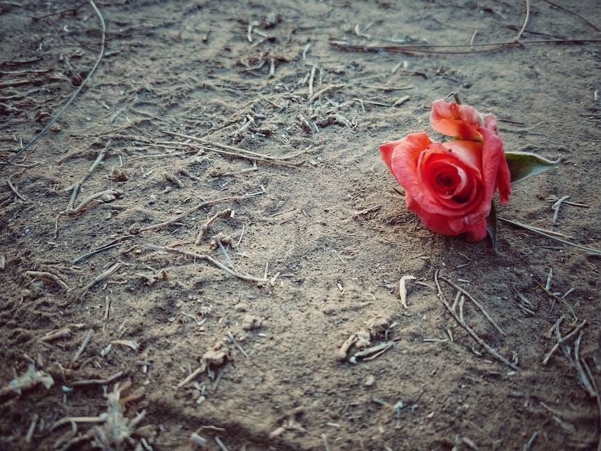 опавшие розы фото впрочем, эта