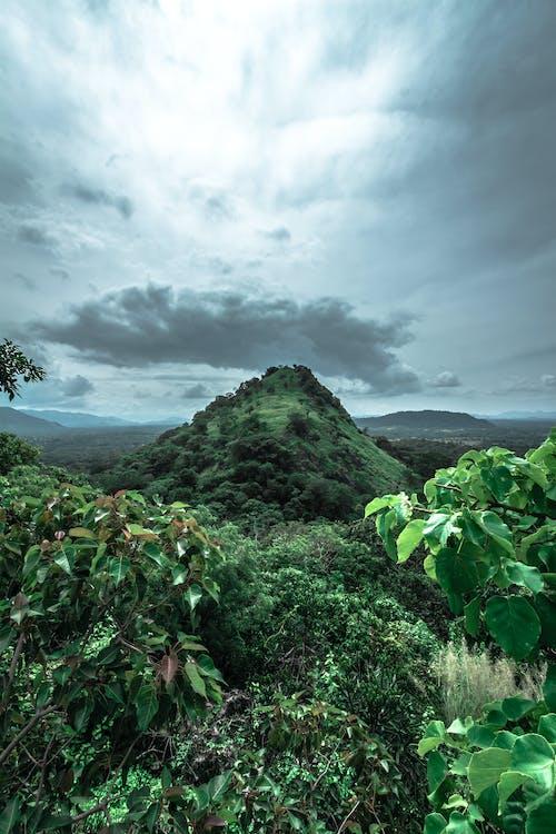 คลังภาพถ่ายฟรี ของ กลางวัน, ท้องฟ้า, ธรรมชาติ, ป่าฝน