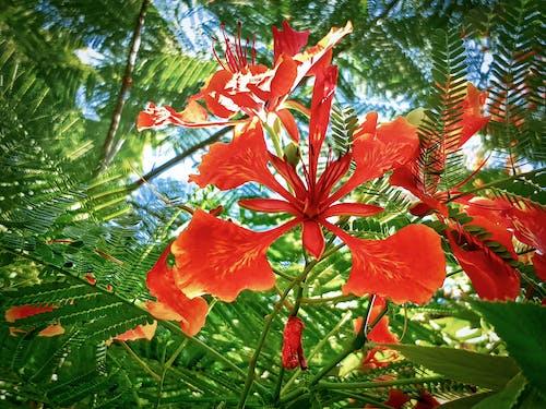 Imagine de stoc gratuită din arbore, flacără, floare, fotografie de aproape