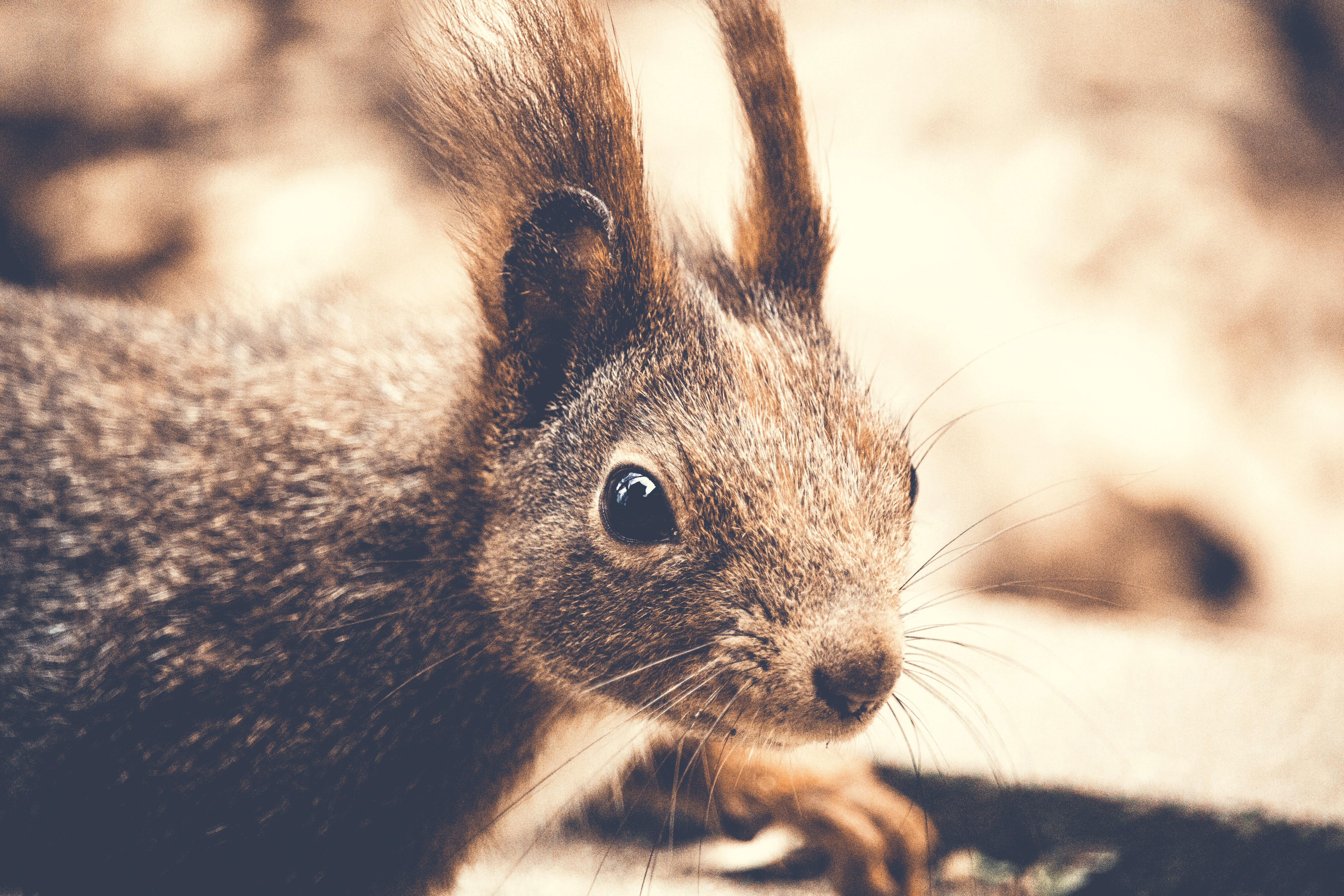 Closeup Photography of Rodent