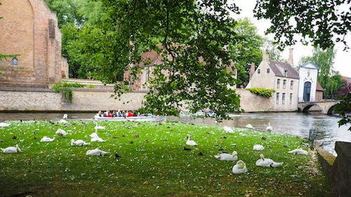 Free stock photo of bruges, canal, old town