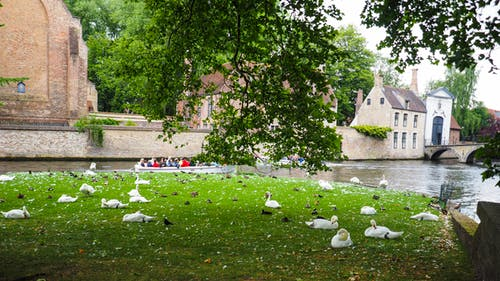 Free stock photo of bruges, canal, old town, swans