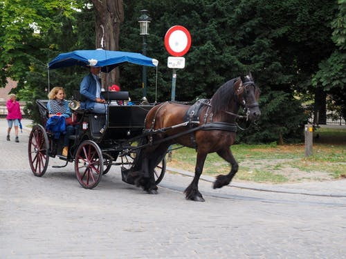 Free stock photo of bruges, carriage, horse