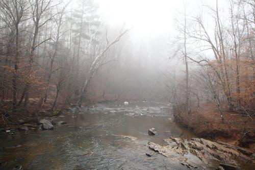 Free stock photo of fog, nature, north carolina, rocks
