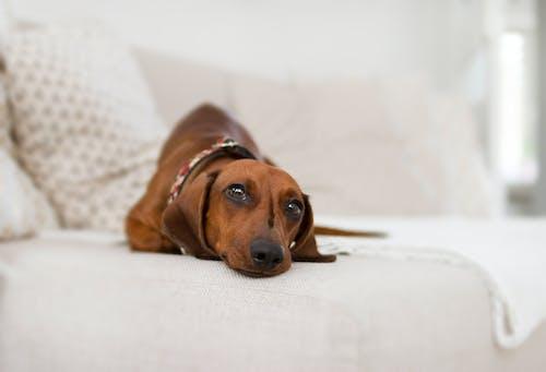 Ingyenes stockfotó ágy, állat, aranyos, barna témában