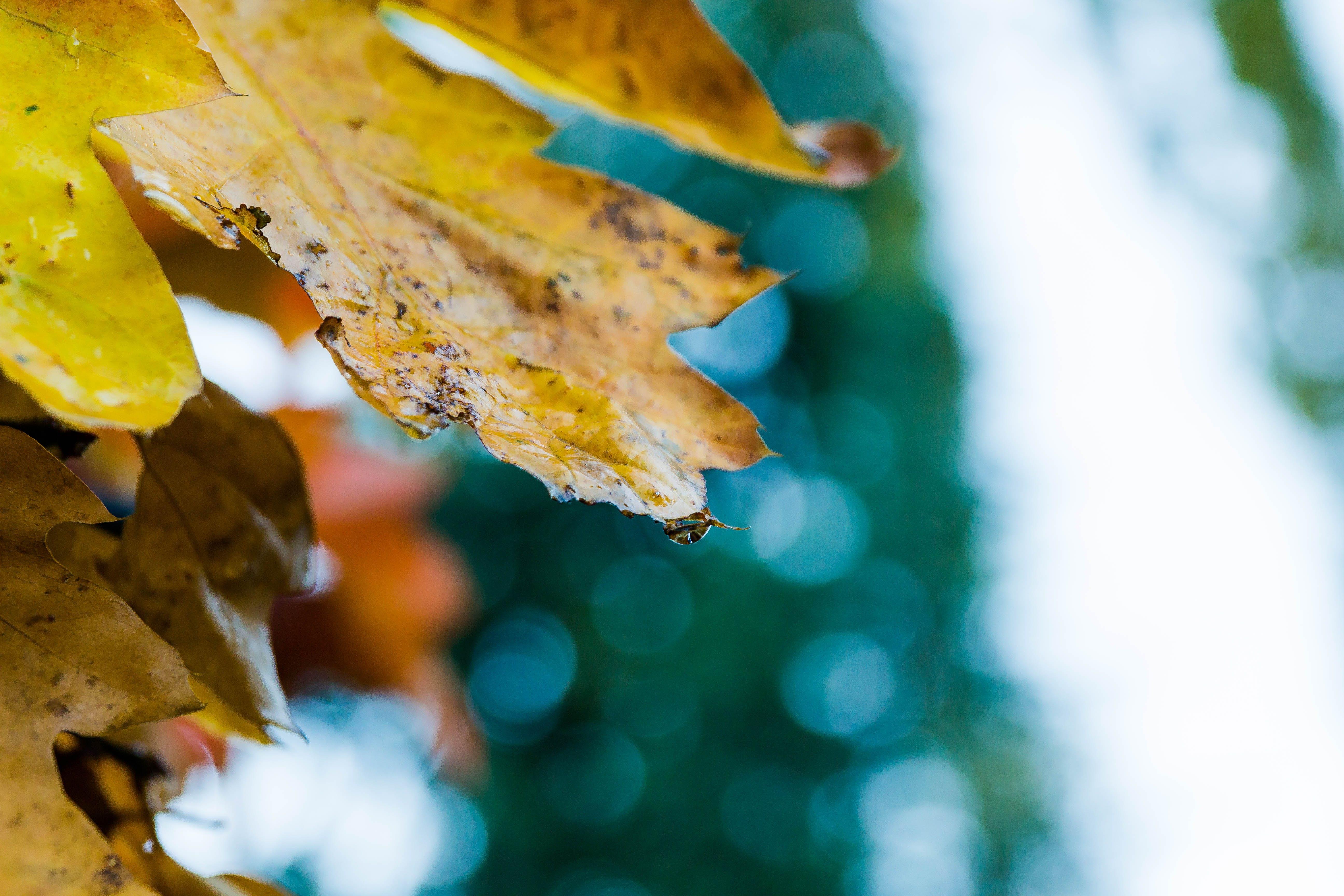 accrochee, arbre, automne
