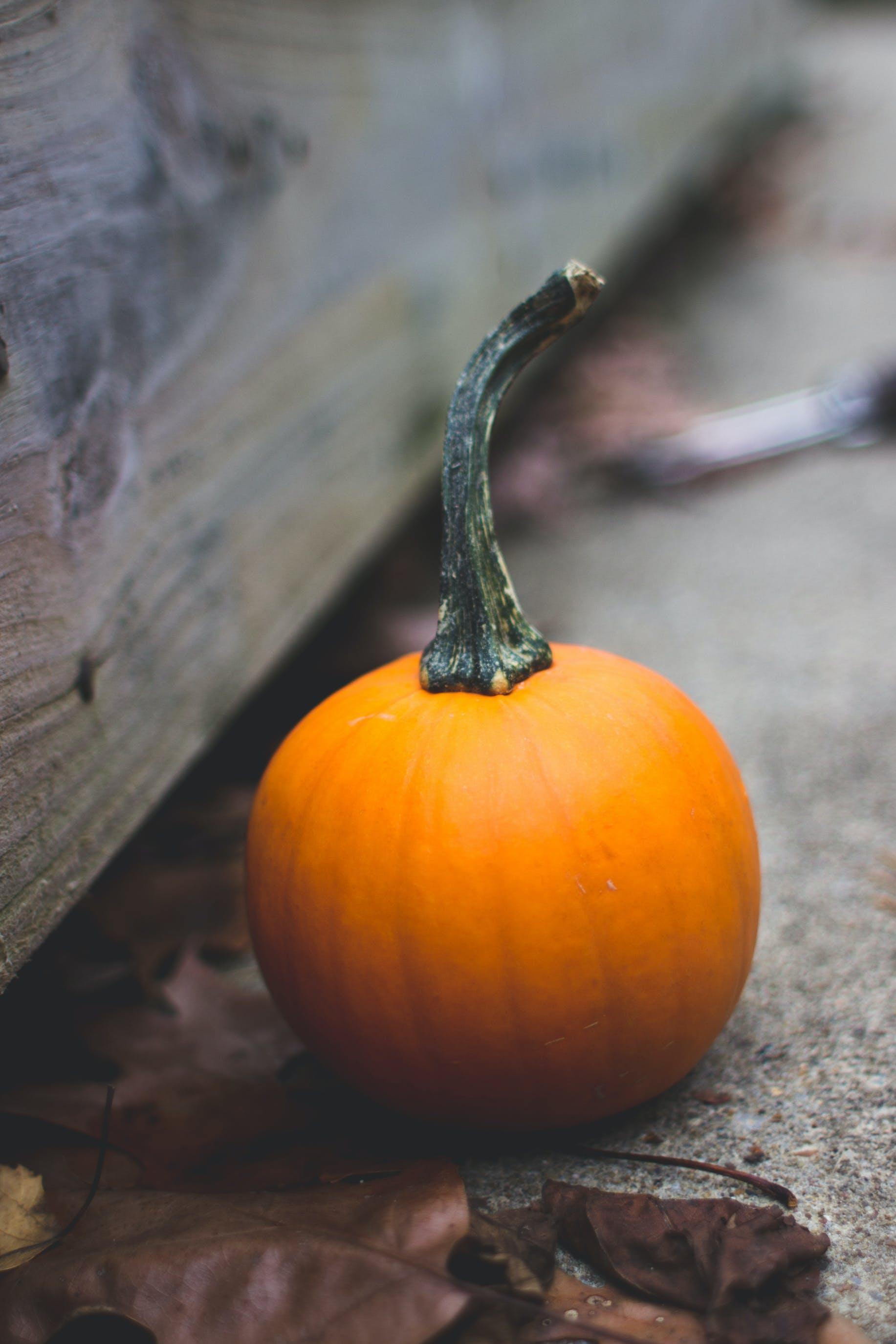 Kostenloses Stock Foto zu halloween, herbst, kürbis