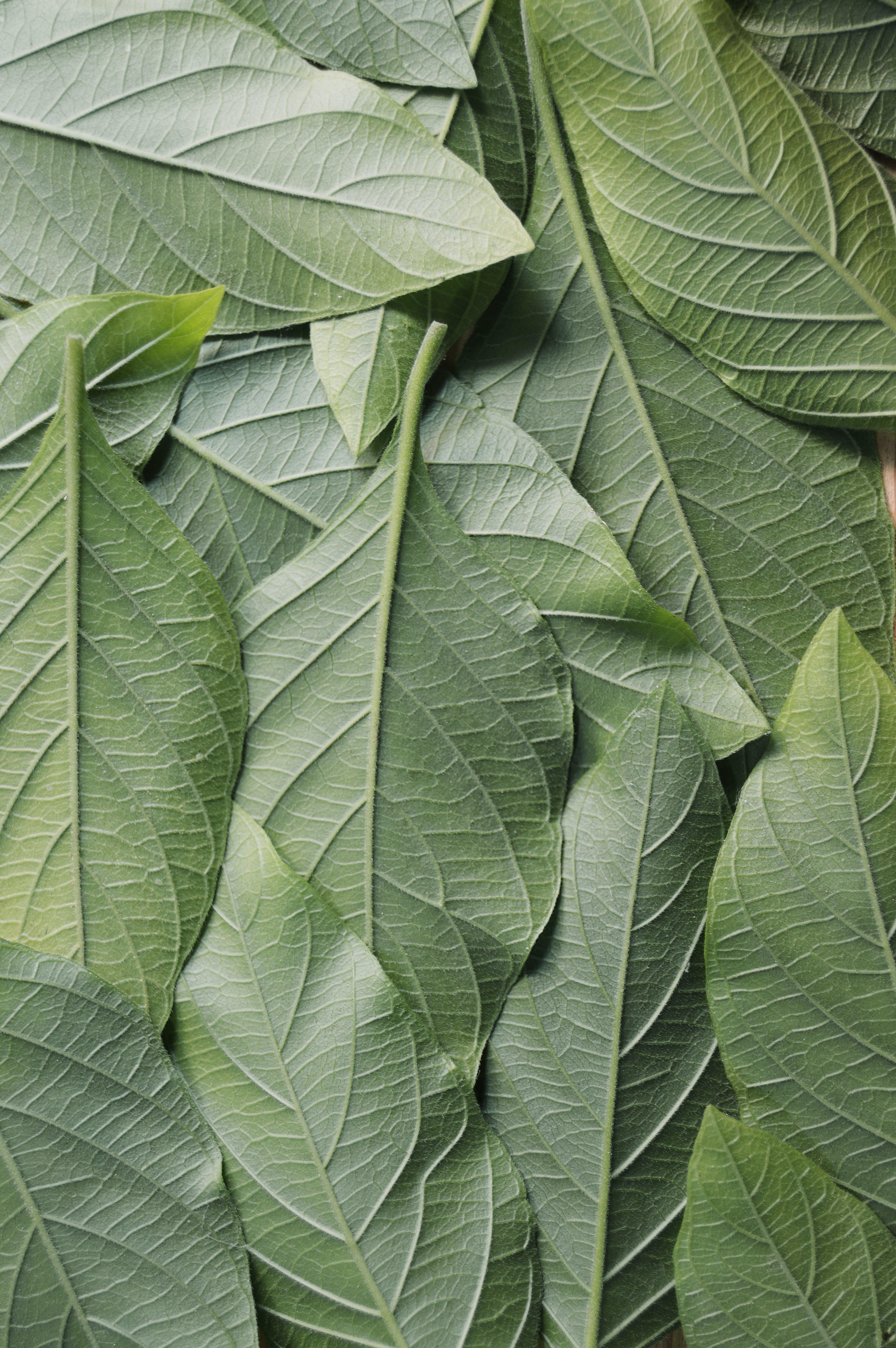 Kostenloses Stock Foto zu botanisch, grün, muster, nahansicht