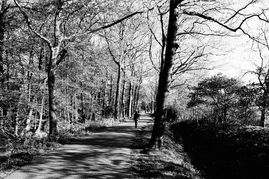 Free stock photo of black-and-white, forest, trees