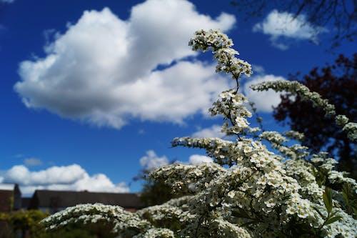 Základová fotografie zdarma na téma denní světlo, jasný, krajina, květiny