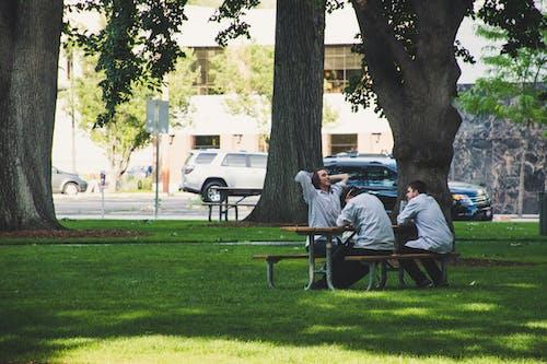 Ingyenes stockfotó barátok, emberek, fák, férfiak témában