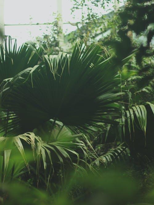 Photos gratuites de centrales, feuille, jardin, vert