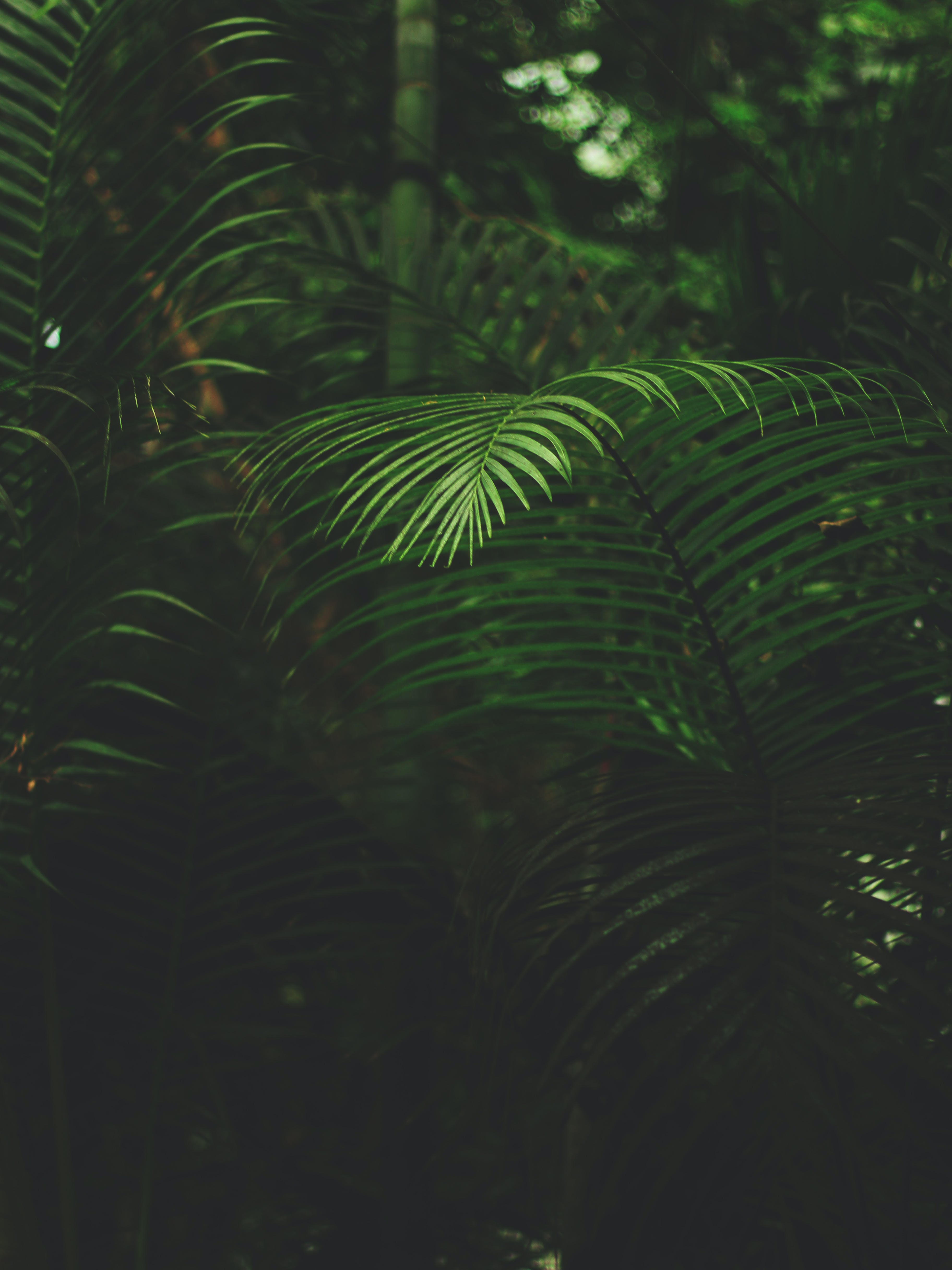 Shallow Focus Photography Of Green Fern