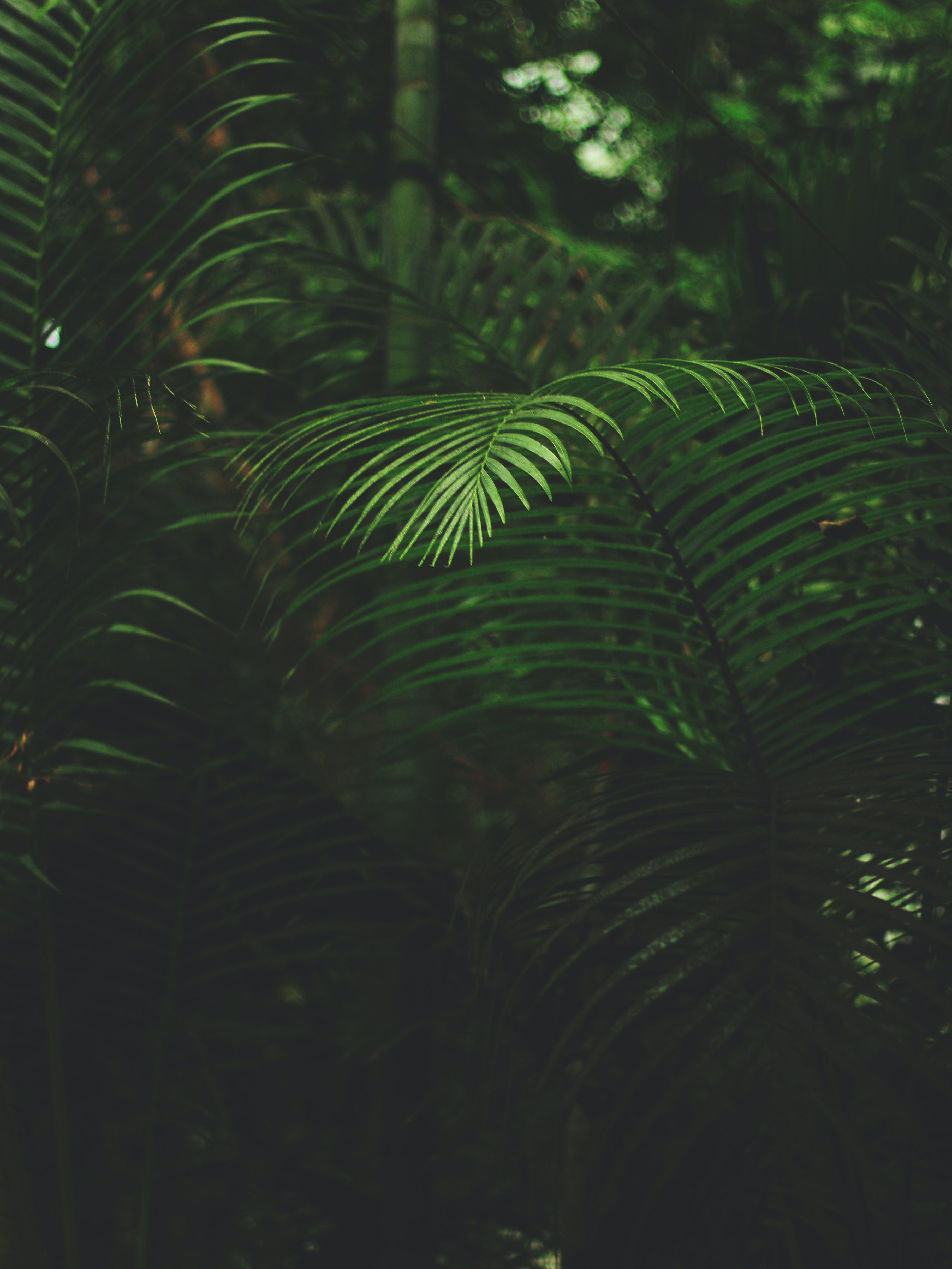 mobile wallpapers · pexels · free stock photos