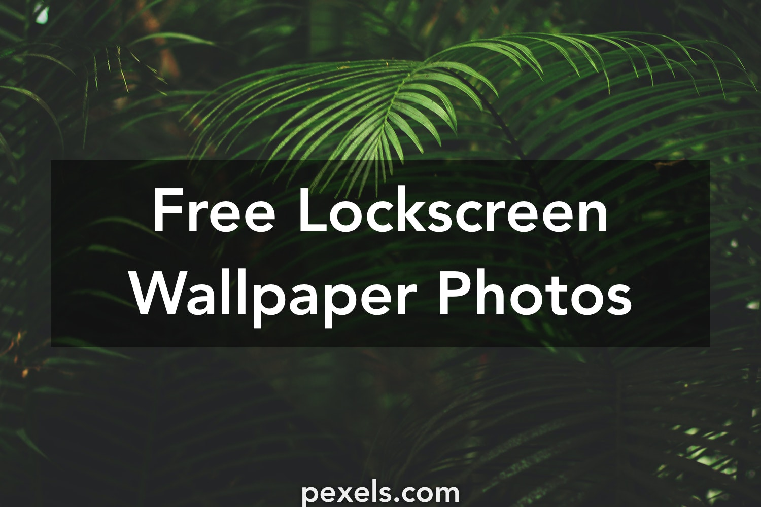 1000 Interesting Lockscreen Wallpaper Photos Pexels Free Stock