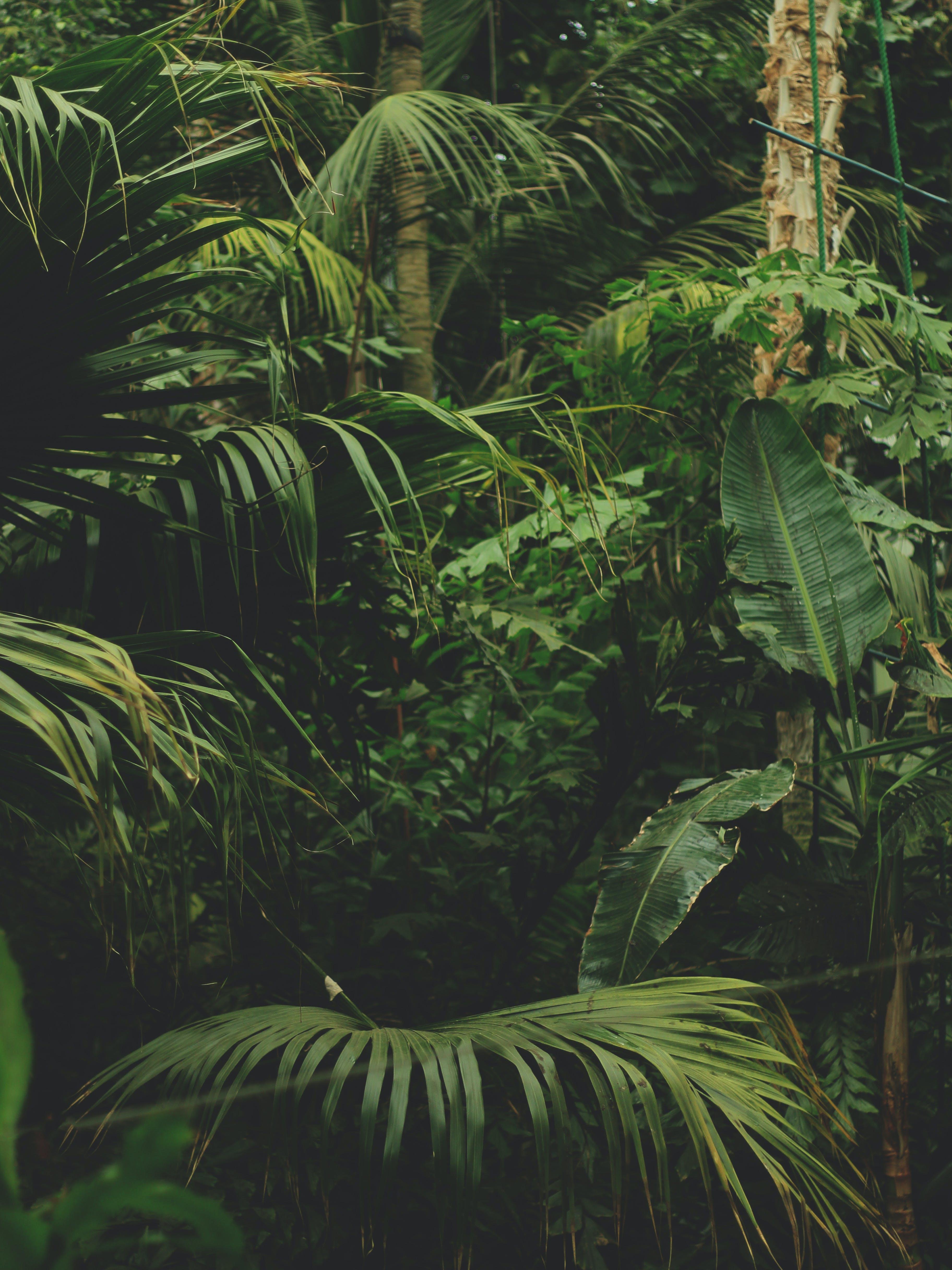 Free stock photo of botanical, botanical garden, botanics, dark green