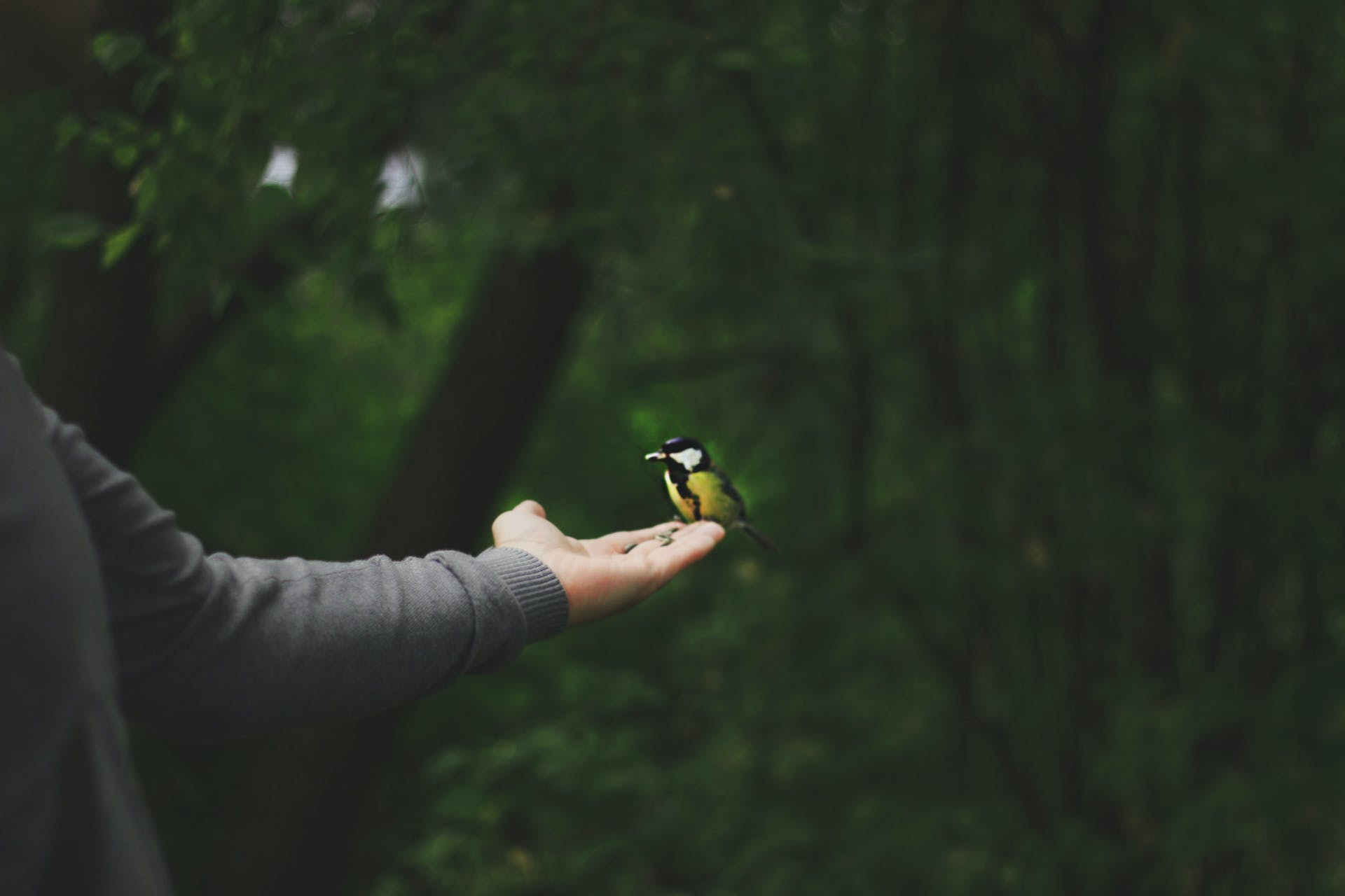 Free stock photo of bird, bird watching, botanical, botanical garden