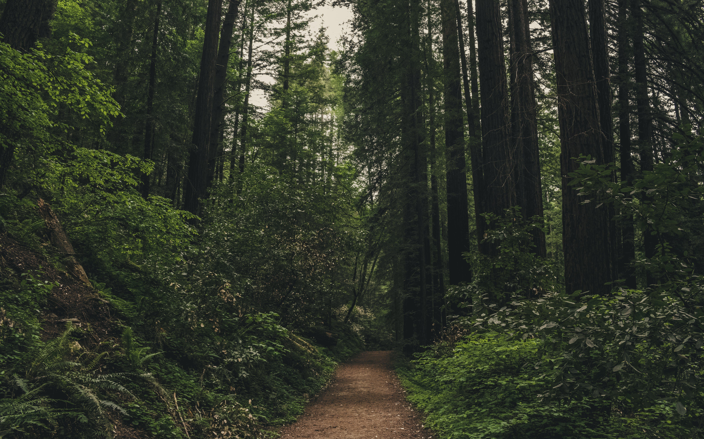 Kostenloses Stock Foto zu bäume, friedlich, garten eden, natur