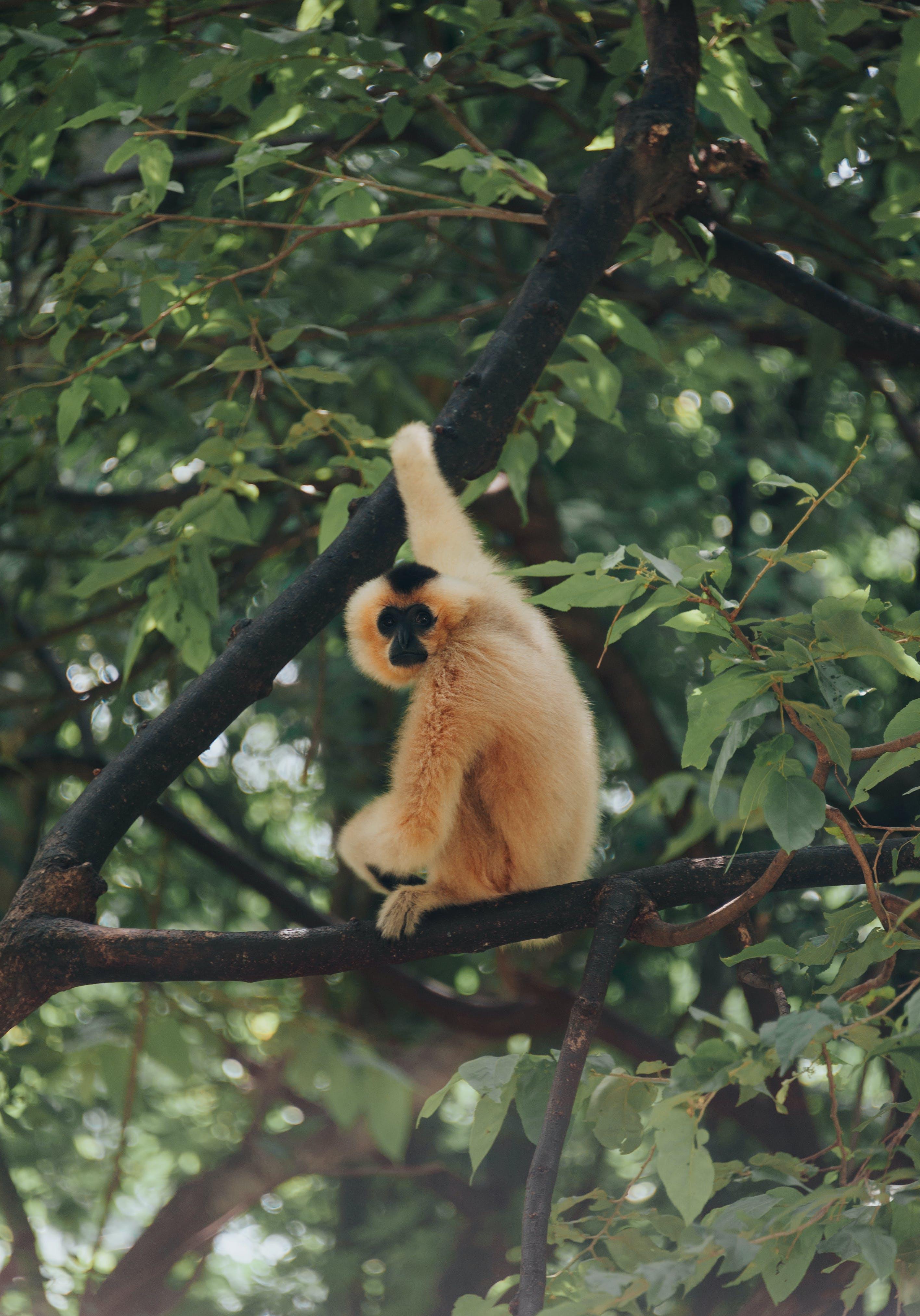 Brown Primate Sitting on Tree Branch