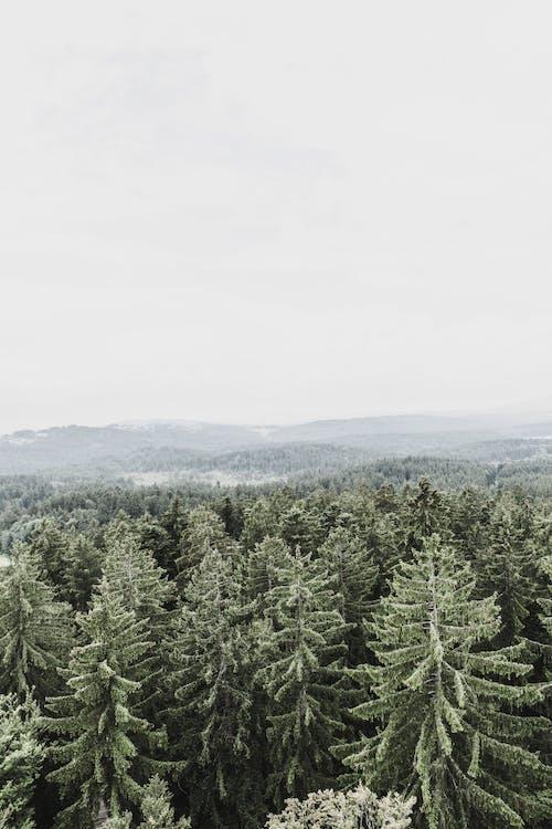 Darmowe zdjęcie z galerii z drzewa, las, natura
