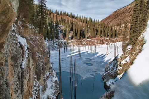 コールド, 冬, 凍るの無料の写真素材