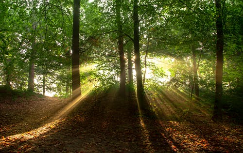 Green Trees With Yellow Sunlight