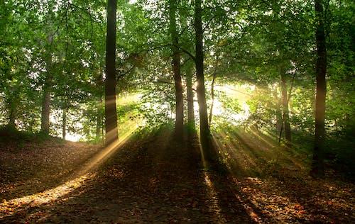 Foto stok gratis alam, daun daun, hutan, lansekap