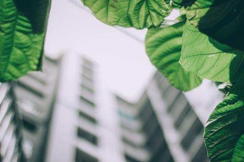 Základová fotografie zdarma na téma barvy, budova, jasný, městský