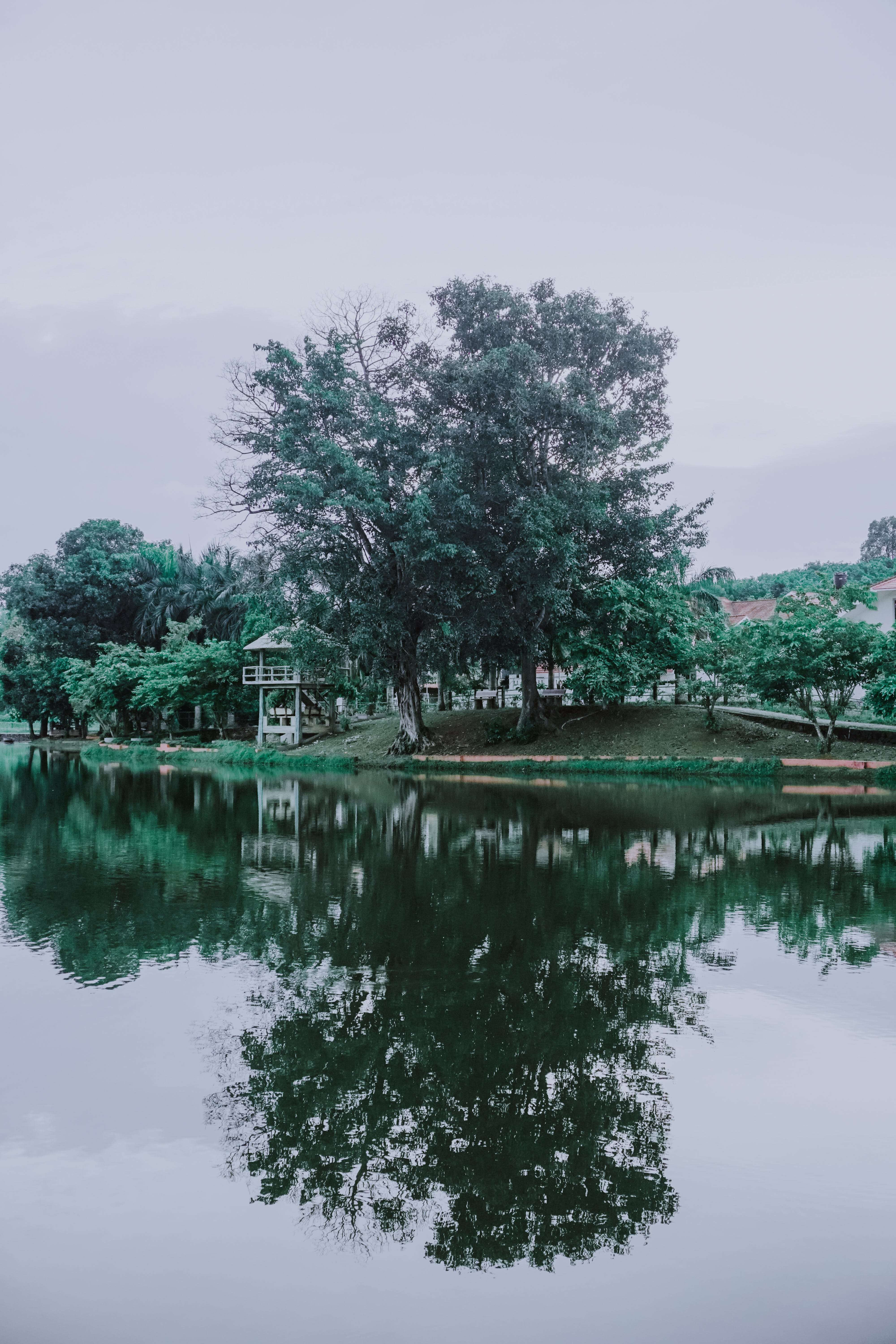 Green Trees Beside the River Under Cloudy Sky